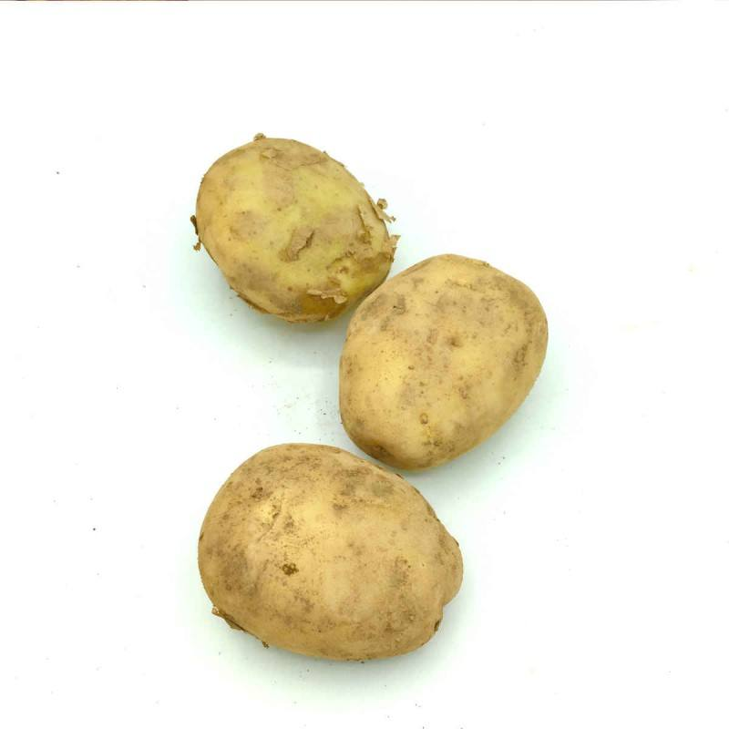 Patata Blanca Kennebeck