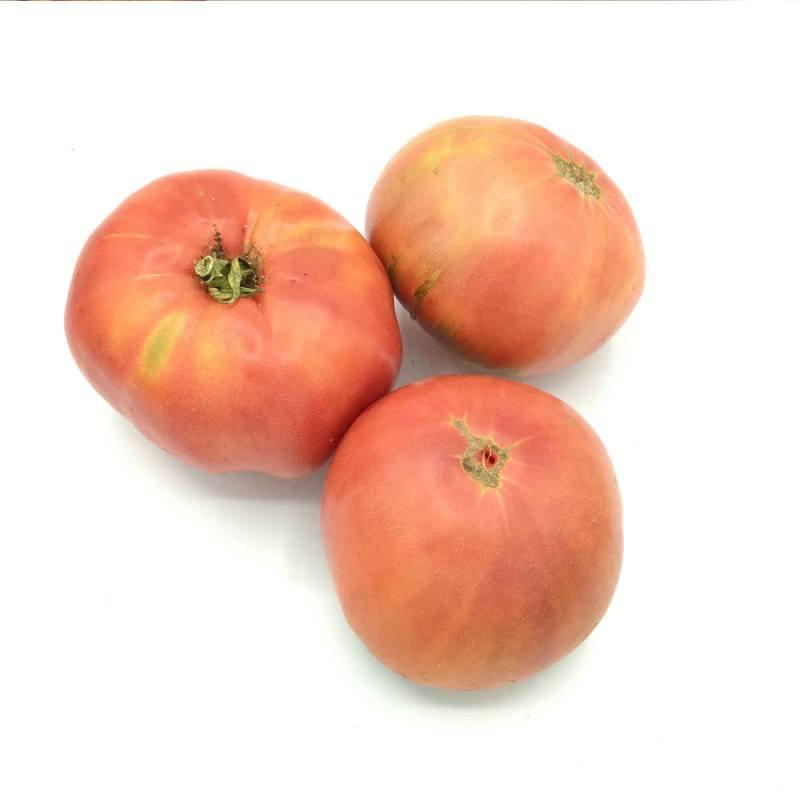 tomate udagorri
