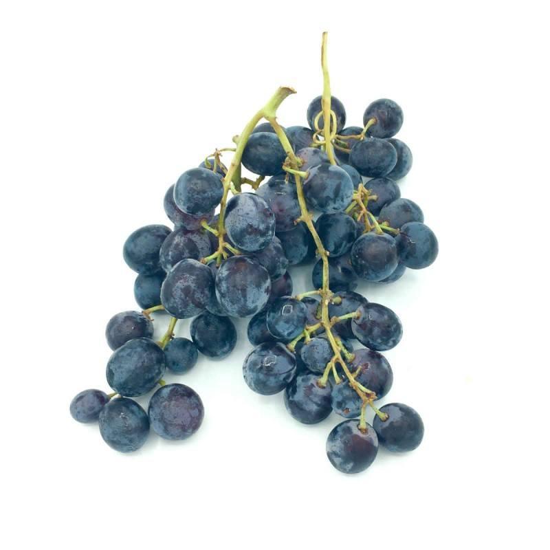 uva negra ecológica